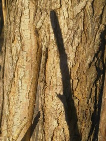 wood-willow