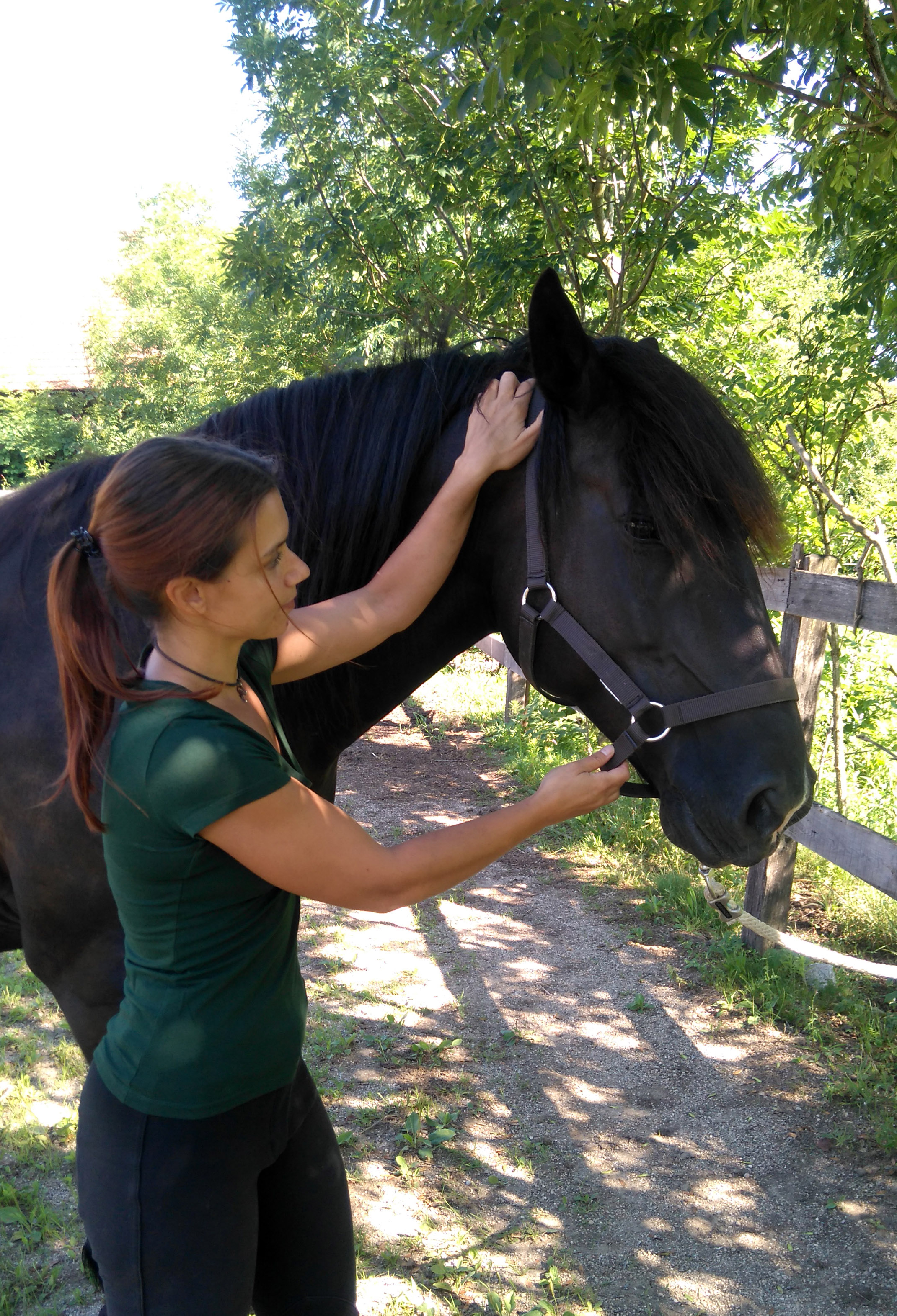 The Equine Neck as an Indicator of Good (or Bad) Training: Part 3
