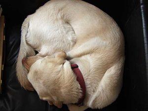 Roberts_dog_Rosie