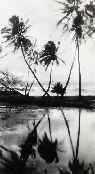 Hawaiian scenery.