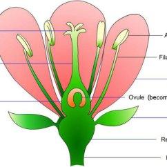 Parts Of A Flower Diagram Ocean Marine Food Web The Anatomy