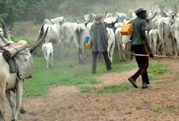 Repentant Fulani bandits explain why they kidnap, attack