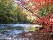 creek4-medium