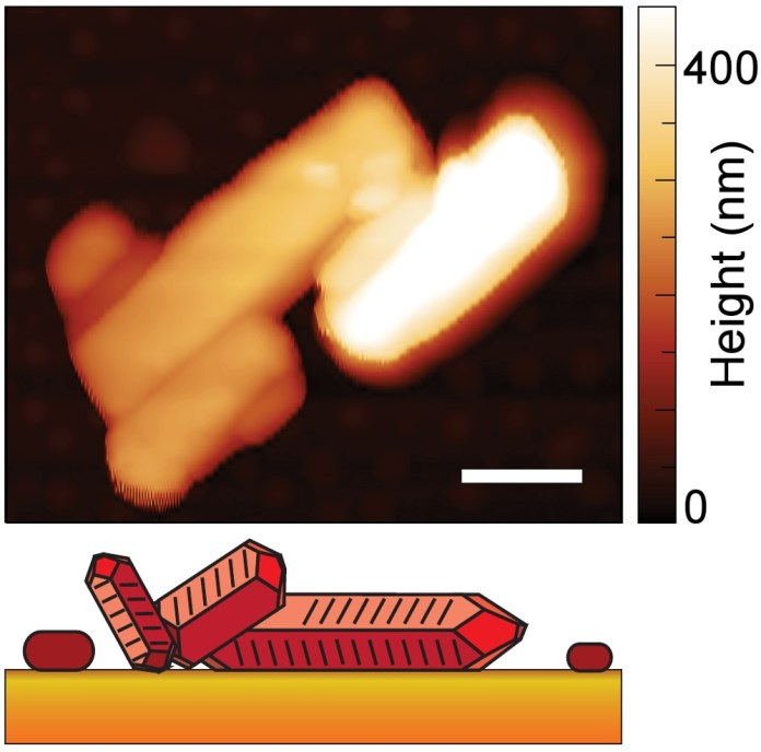 Image - This image shows the crystal shape and height of a material known as PTCDA, with height represented by the shading (white is taller, darker orange is lowest). The scale bar represents 500 nanometers. The illustration at bottom is a representation of the crystal shape. (Credit: Berkeley Lab, CU-Boulder)