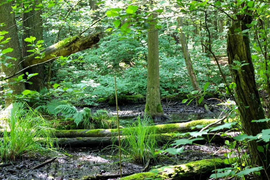 nationalpark-hainich-nicolos-reiseblog-naturbelassen