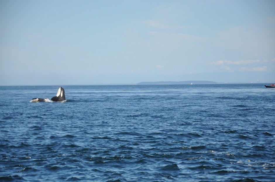 Whale Watching Kanada