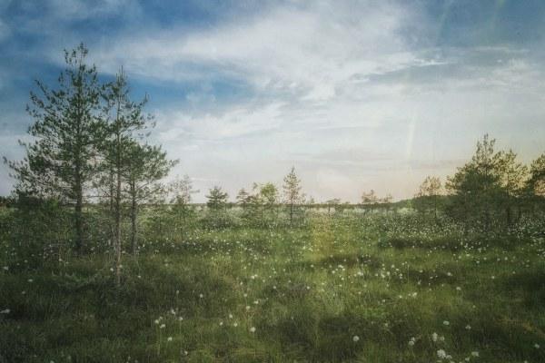 Estland Reisetipps
