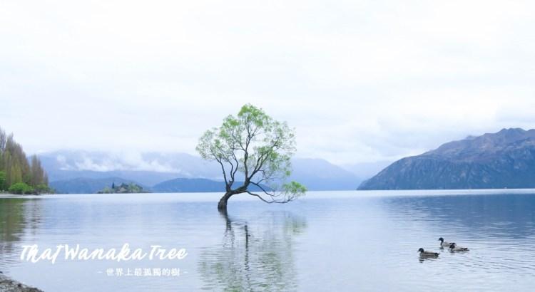 【瓦納卡孤獨樹】That Wanaka Tree,還有親子公園,小鎮靜謐的令人捨不得離開
