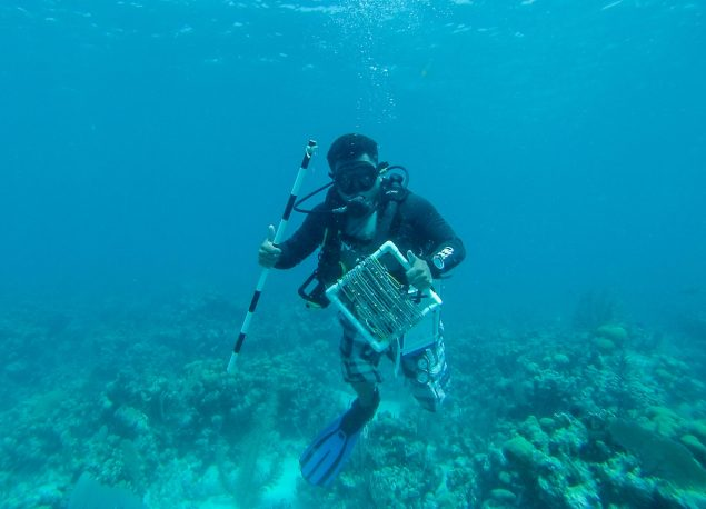 Tyrell with all the equipment needed for benthic reef surverys