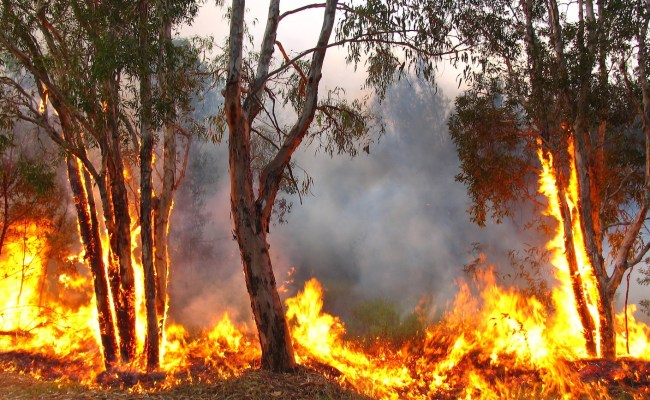 Feeling Despair Over The Qld And Nsw Fires Here S How You