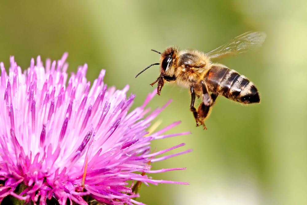 Risultati immagini per api