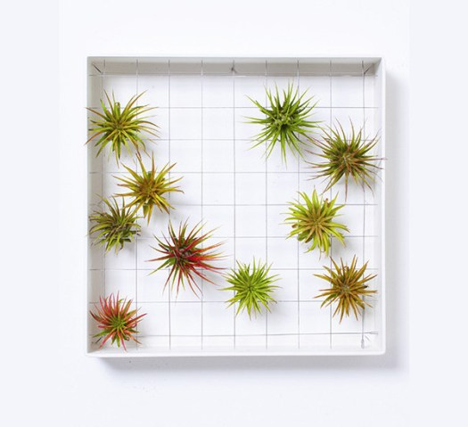 GiftGuide2015-NewHome-4-airplant-frame