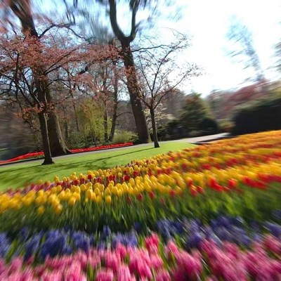 DJI FPV drone takes 'a bird's flight' through one of the world's largest tulip gardens