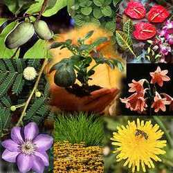 Floriculture Consultancy Services - Floriculture Consultancy Firms & Companies in India