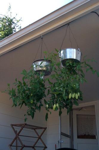 Upside-down Tomato Planter System (via NineInchNachos)