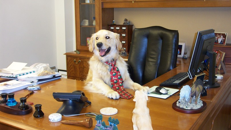 Today Is National Bring Your Dog To Work Day Heres Why