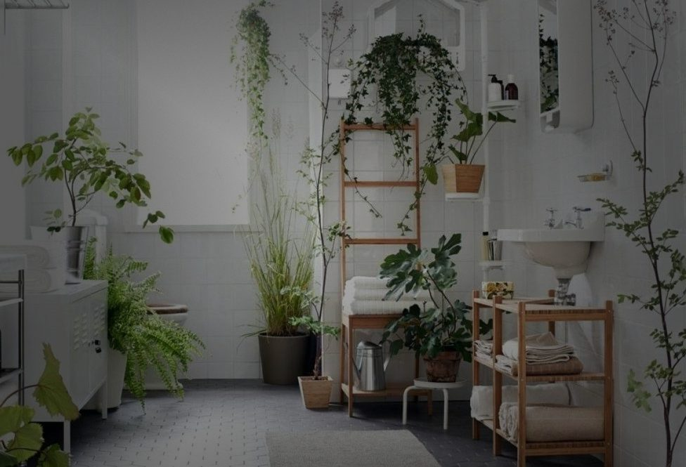 Quelle plante mettre dans une salle de bains