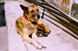 In Greece, dogs and cats wander the streets at will. All are collared and well-mannered; sometimes you would realize at the end of dinner a German shepherd had been asleep at your feet the entire meal.