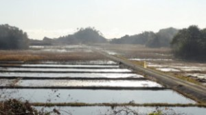 NICCO is helping restore damaged rice fields.