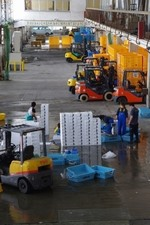 Fork lifts and holding tanks provided by Peace Winds Japan are being used at the newly reopened Ofunato fish market.