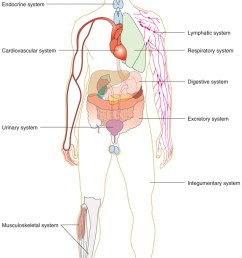 tissues organs organ systems and organisms [ 754 x 1147 Pixel ]