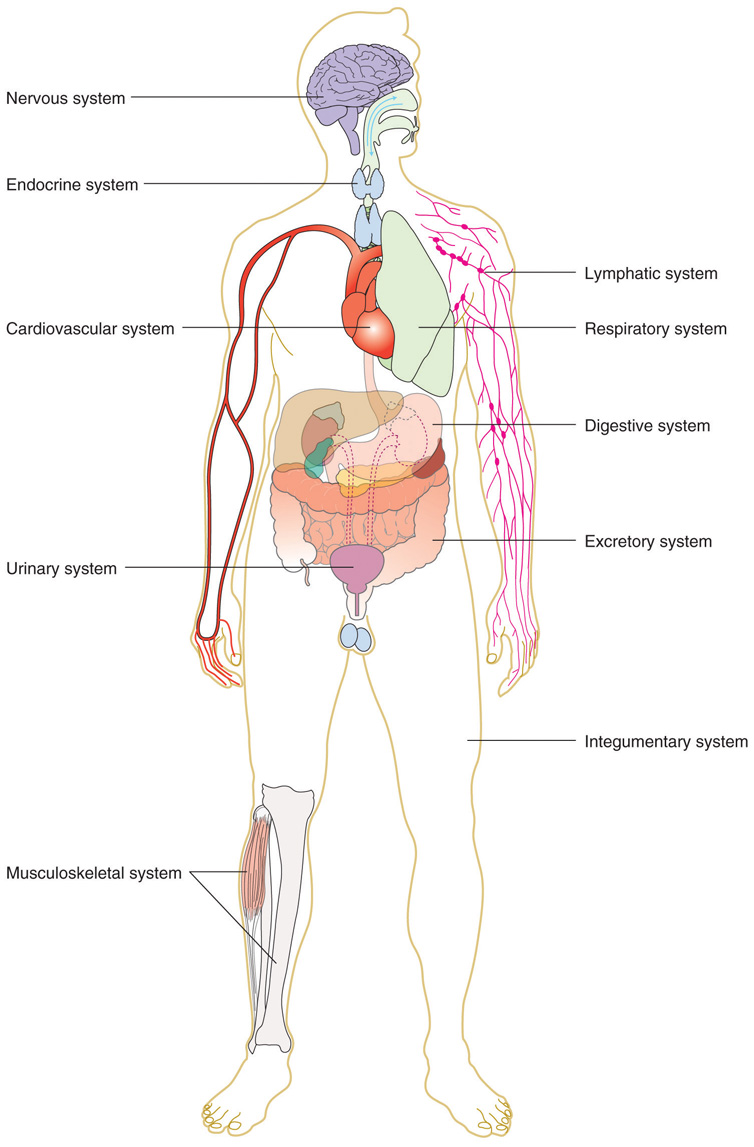 hight resolution of tissues organs organ systems and organisms