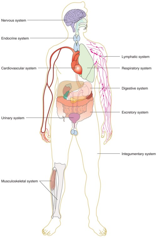 small resolution of tissues organs organ systems and organisms