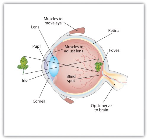 small resolution of seeing printable diagram of the eye eye diagram label