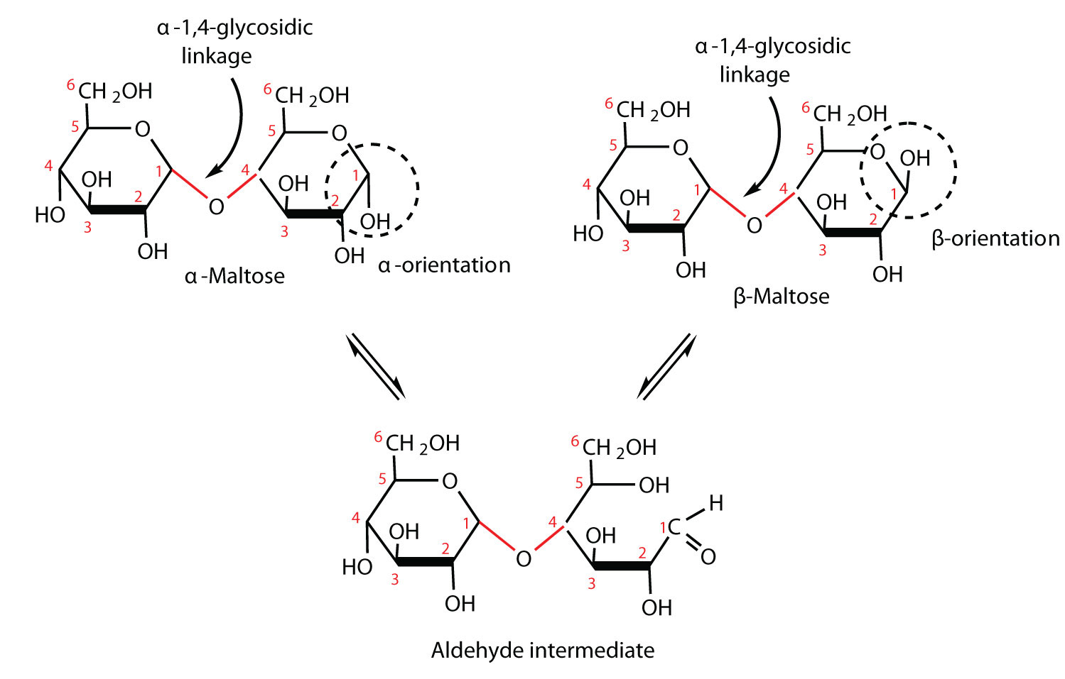 carbohydrate structure diagram philips advance ballast icn 4p32 n wiring disaccharides
