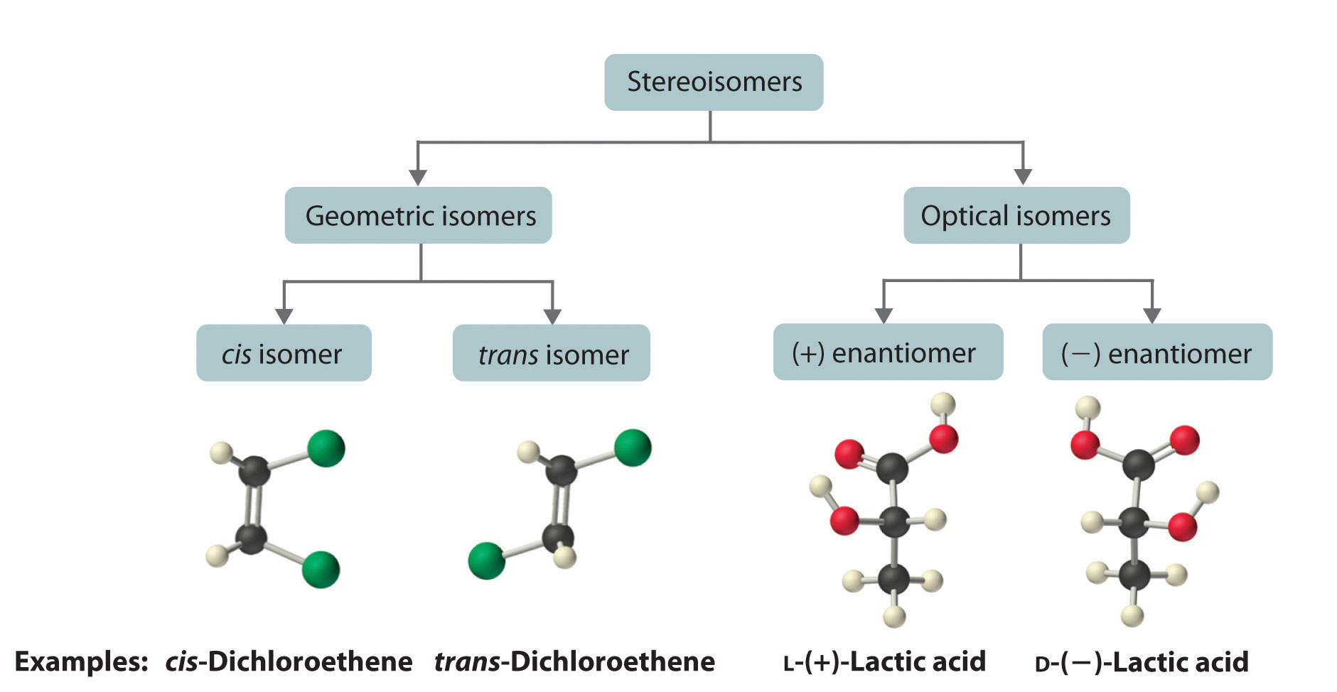 What Are Stereoisomers Give Me An Example Example