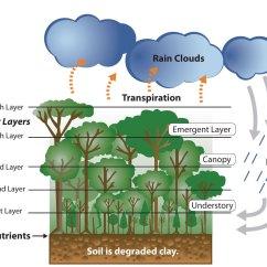 Deciduous Forest Diagram Backflow Device Installation Tropical Rain