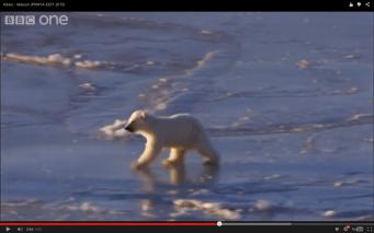 osito polar en hielo