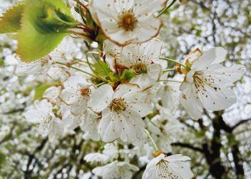 Verregneter Frühling; Foto: M. Geißler