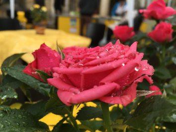 Blumenschmuck vom Blumenhaus Linke, FuBuFe 2018, Foto: M. Geißler