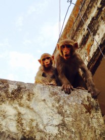 This monkey wasn't too happy about me taking pictures of its baby... (Photo by Morgan)