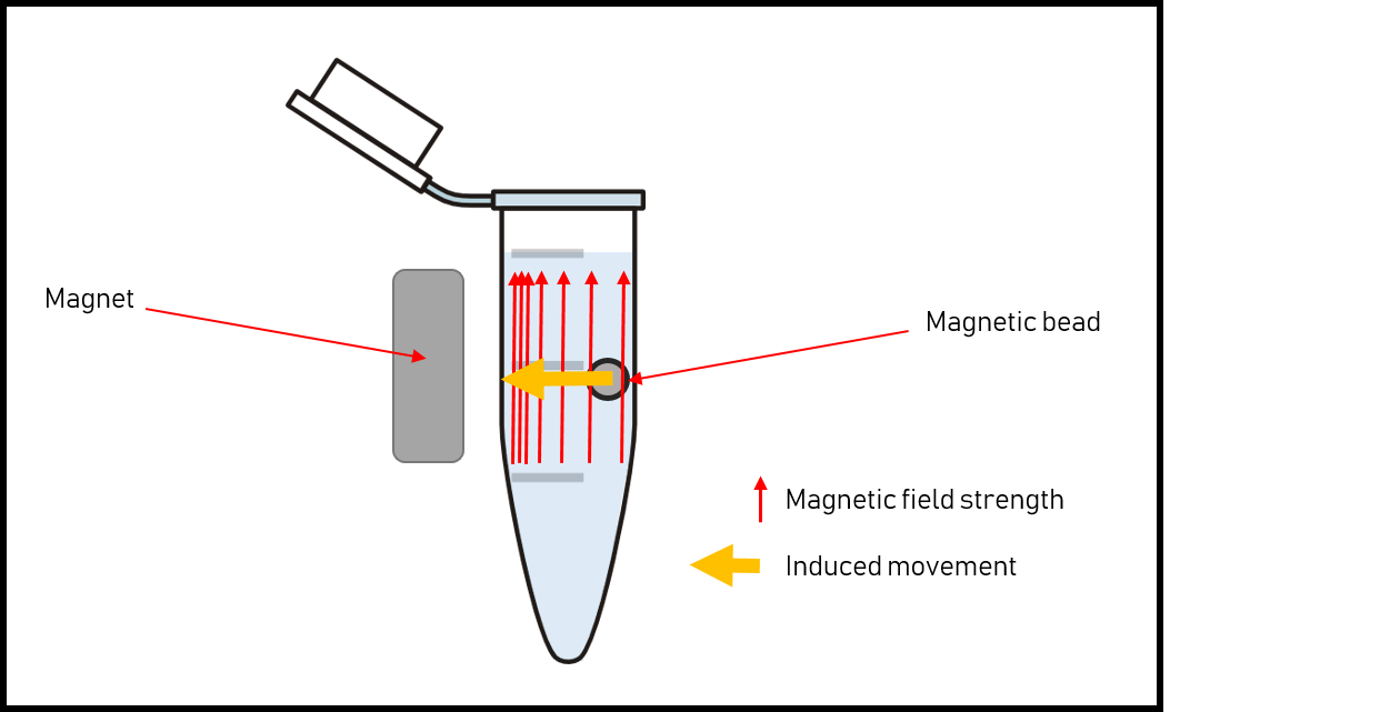 hight resolution of this is done by applying a magnetic field in our case using permanent magnets the beads will move from the region with a low magnetic field to the region
