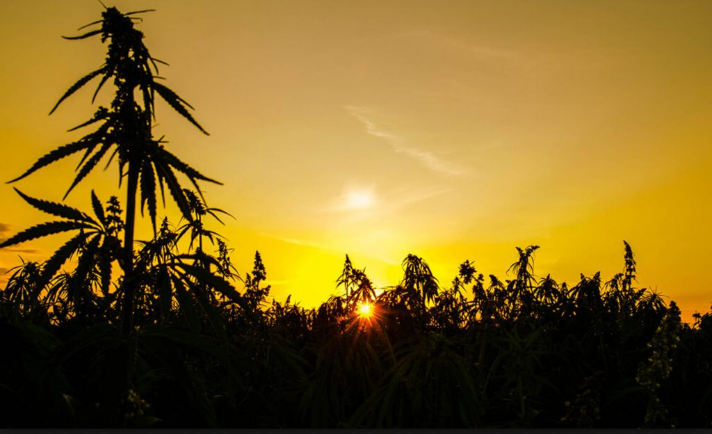 2018_Hemp_Farming_Act_00052