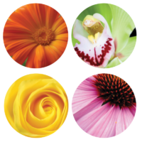 WHY_LNZ_complex_flowershield_SQ-200x200