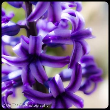 flowers-901