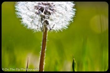flowers-903