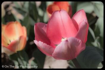 flowers-913