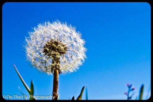 flowers-914