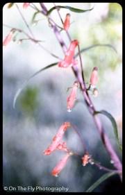 flowers-925