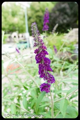 2015-07-21-0503-Flowers