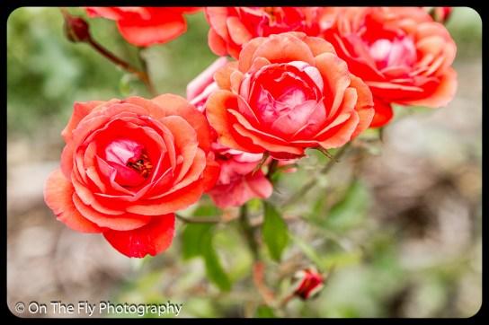 2015-07-21-0525-Flowers