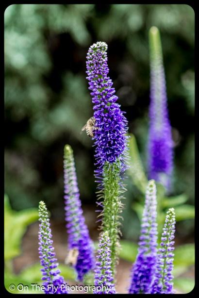 2015-07-21-0536-Flowers