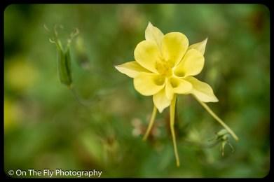 2015-07-21-0545-Flowers