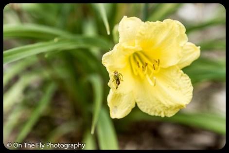 2015-07-21-0548-Flowers