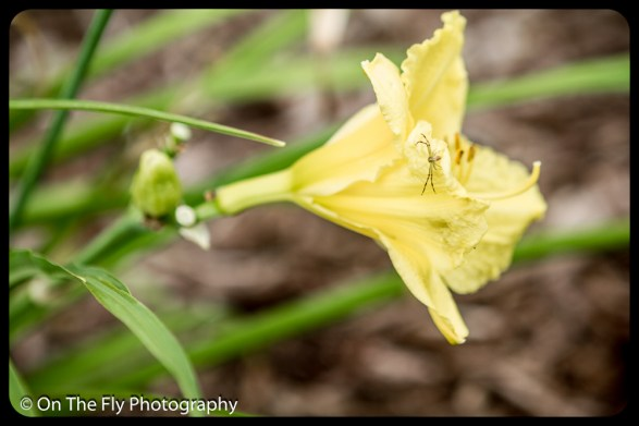 2015-07-21-0553-Flowers