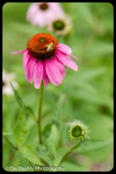 2015-07-21-0560-Flowers